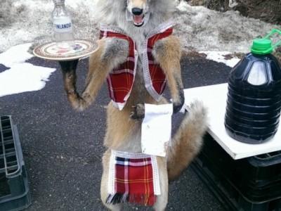 Мъртви лисици в народни носии ужасяват туристи